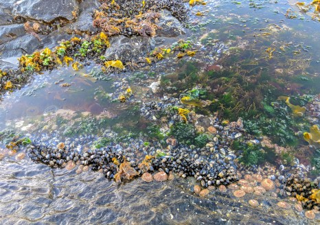 Cape Town Rockpools